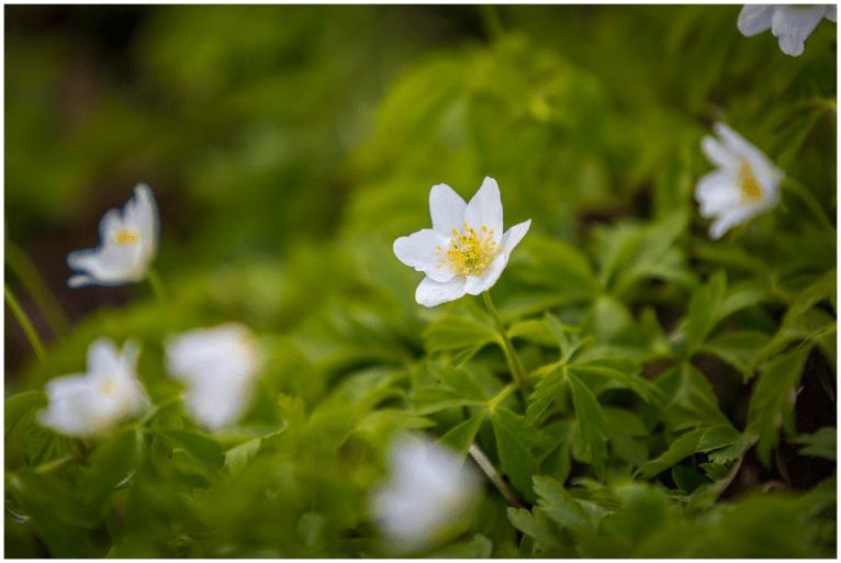 05 04 2015 – Frühlingsboten