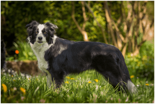 10 05 2015 – Nell