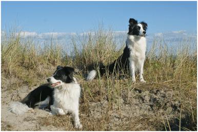 07|09|2015 – Liv macht Urlaub in Dänemark