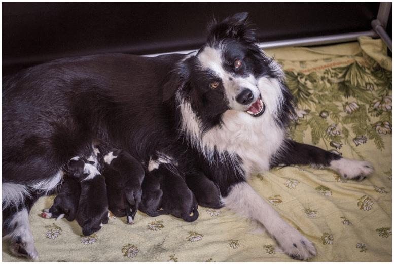 13 09 2015 – Mutterglück