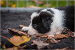 21|10|2015 – Die Sieben erkunden den Garten