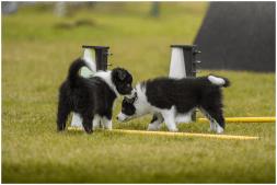 10|11|2015 – Mit Siebenmeilenstiefeln über den Hundeplatz