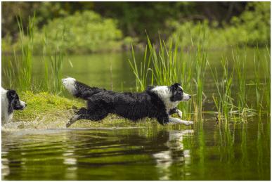 Juni: Nell kann übers Wasser gehen