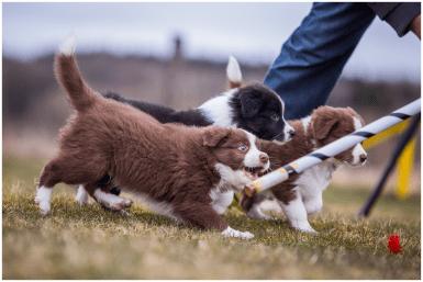 28|03|2016 – Spaß auf dem Hundeplatz