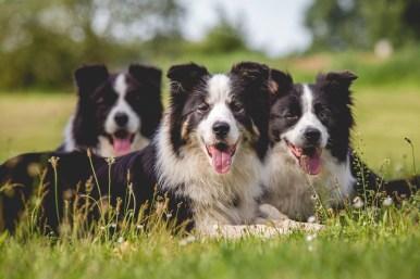 10 07 2016 – Hundefamilienfoto