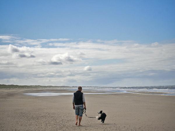 Urlaub mit Hund in Dänemark, Border Collie am Strand