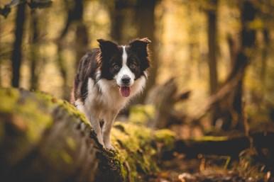 23|10|2016 – Ida im Wunderwald
