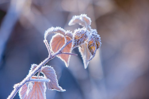 03|12|2016 – Frost