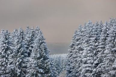 08|11|2016 – Winterwald bei Liebenscheid
