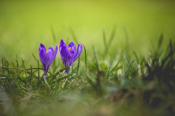 26|03|2017 – Frühlingsboten