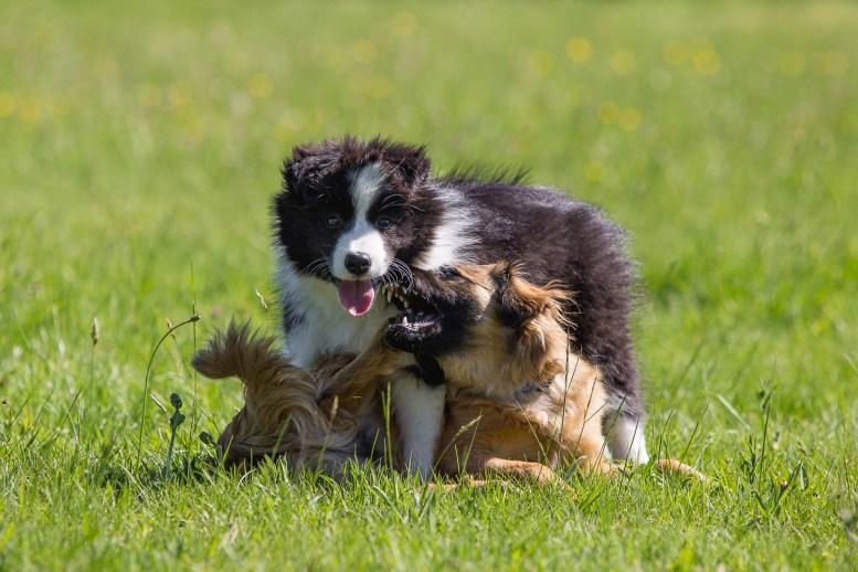 27|05|2017 – Heidi und Hundeplatz-Freundin Titina
