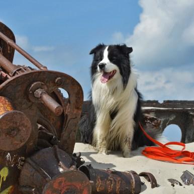 Joey (Broadmeadows Black Diamond) macht Urlaub auf Norderney
