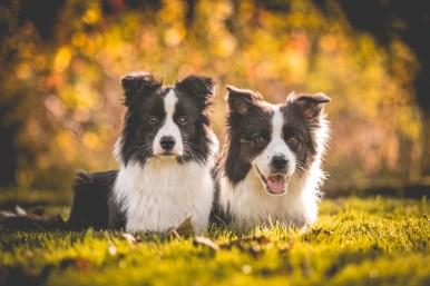 18|10|2017 – Heidi und Ida