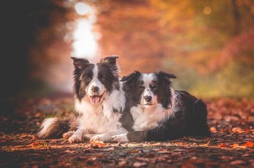 18|10|2017 – Ida und Nell
