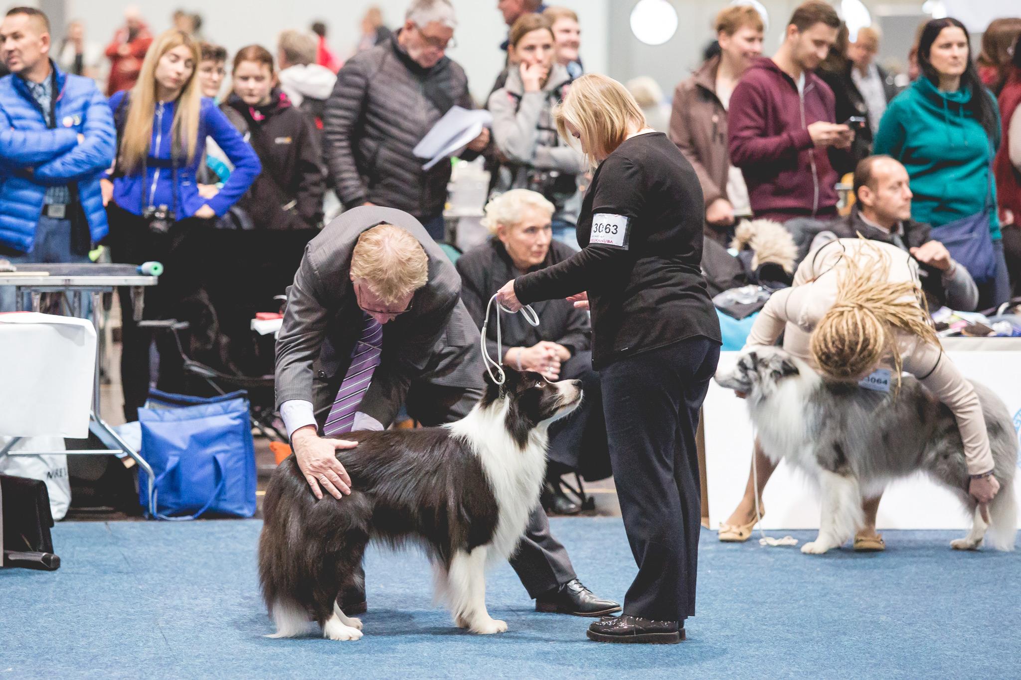 11|11|2017 – World Dog Show in Leipzig