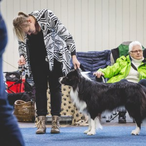 Familienfest mit Border Collies
