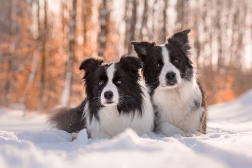 13|02|2019 – Heidi und Ida