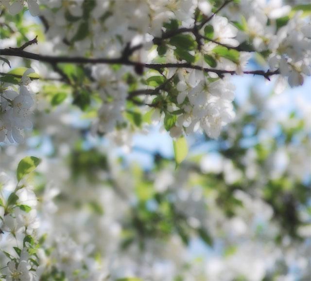"""""""Spring"""" Symphony"""