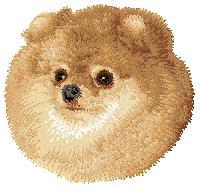 Hundbrodyr Pomeranian