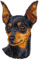 Hundbrodyr Dvärgpincher