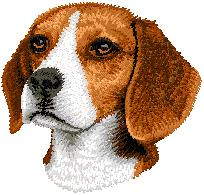 Hundbrodyr beagle