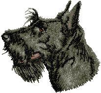 Hundbrodyr Skotsk terrier