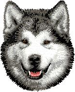 Hundbrodyr alaskan malamute