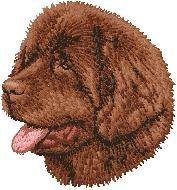 Hundbrodyr Newfoundland brun