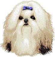 Hundbrodyr Shihtzu