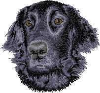 Hundbrodyr Flatcoated retriever