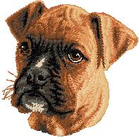 Hundbrodyr Boxer valp