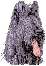 Hundbrodyr Briard
