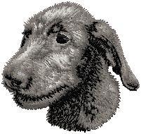Hundbrodyr Irländsk varghund valp