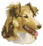 Hundbrodyr Shetland sheepdog