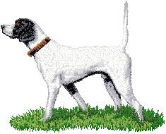 Hundbrodyr Pointer