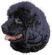 Hundbrodyr Newfoundland valp