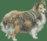 Hundbrodyr soble Shetland sheepdog, stående