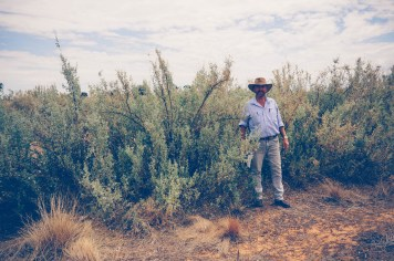 Ray Thompson demonstrating the height of the saltbush