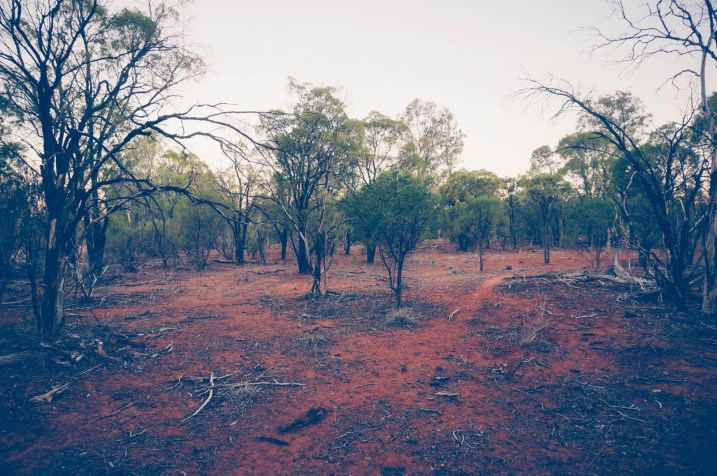 Semiarid woodlands near Bourke