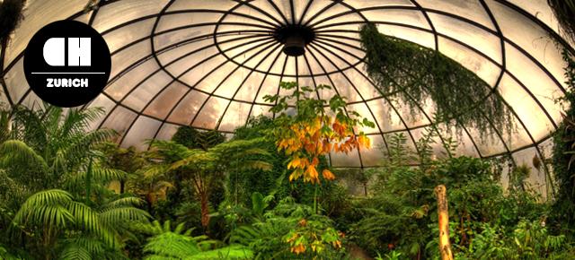 Zurich Botanical Garden  Broke Tourist