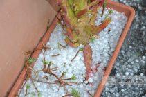 2016watermarked-thumbnail_bronte-grandine-sui-balconi-2