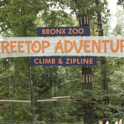 Treetop Adventure at the Bronx Zoo