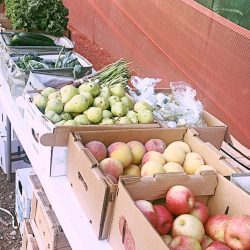 Still Time to Get Your Thanksgiving Farm Stand Box