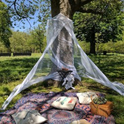 5 Places to Enjoy a Spring or Summer Picnic in the Bronx