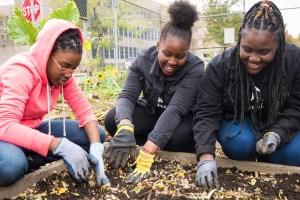 Free Online STEM Programs with City Parks Foundation