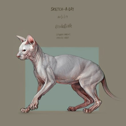 Sketch-a-day Sphynx cat drawing by Brooke Dibble / og:image