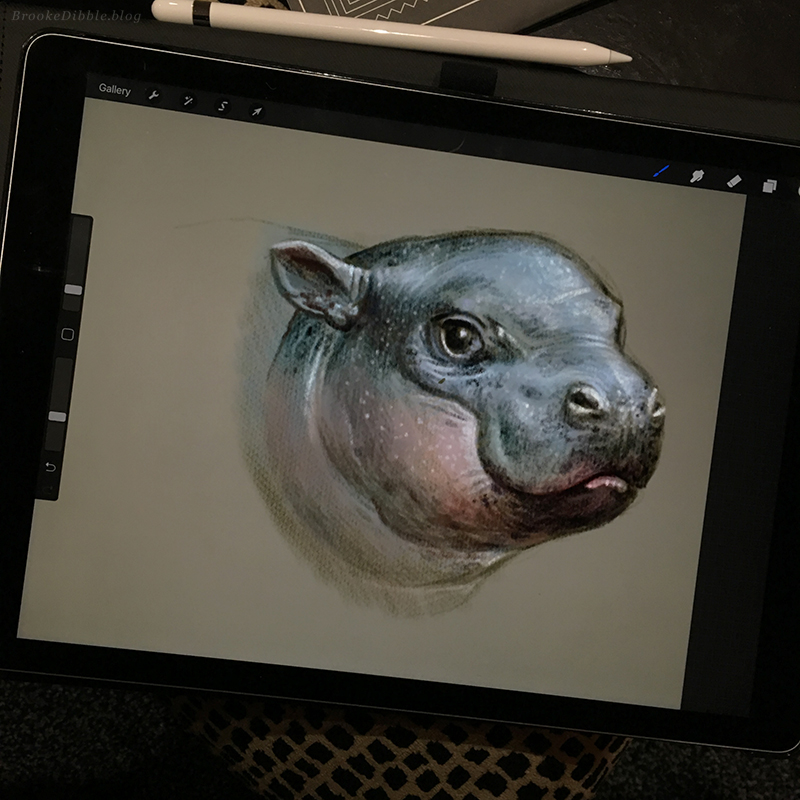Hippo study sketch on iPad Pro