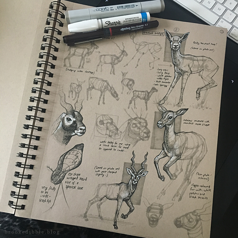 Antelope sketchbook study pages