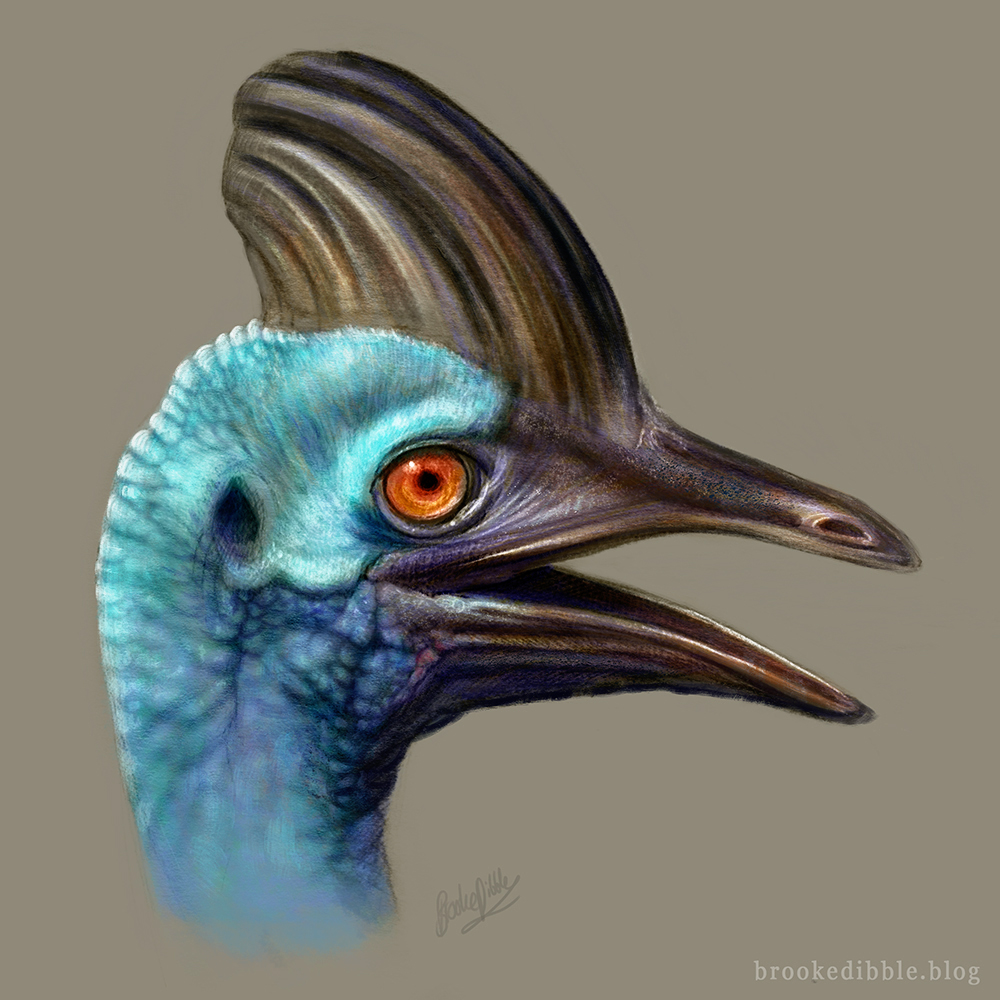 Cassowary colour