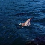 Mother's Day, Jesus, and Dolphins